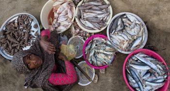 بازار سنتی ماهی فروشان میناب