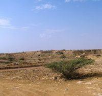 طرح ممیزی مراتع در ۱۰۰ هزار هکتار از اراضی مرتعی شهرستان بندرلنگه آغاز شد