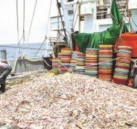 کشتی های چینی آبزیان کف دریا را جارو کردند/ آیا در ممنوعیت صید ترال معیشت صیادان بومی در نظر گرفته شد؟